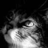 Here Kitty! Cat Sitting Service - last post by DAHarvey